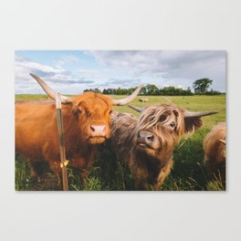 Highland Cows - Blep Canvas Print