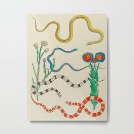 Locupletissimi rerum naturalium - vol. 2 - Albertus Seba Colorful Snake Floral Arrangement Metal Print