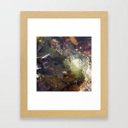 Shy Anemone Framed Art Print
