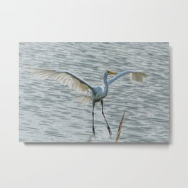 Egret On Final Approach Metal Print