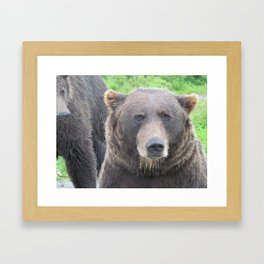 Grizzly Bear Face Framed Art Print