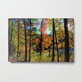 Walden Pond Autumn Forest  in Concord Massachusetts Metal Print