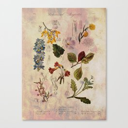 Botanical Study #1, Vintage Botanical Illustration Collage Canvas Print