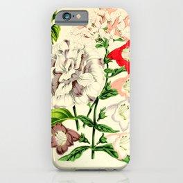 Flower bouvardia longiflora magnifica petunia inimitabilis pentstemon6 iPhone Case