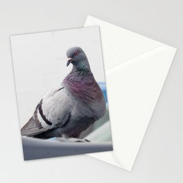 Pigeon Hello Stationery Cards