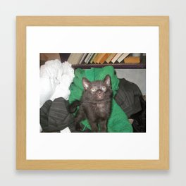 Black Kitten Adorable Framed Art Print