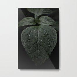 Botanical Still Life Photography Drops On Leaf Metal Print