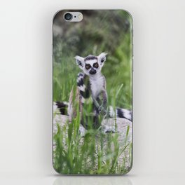 Lemurs are sitting among the green grass. iPhone Skin