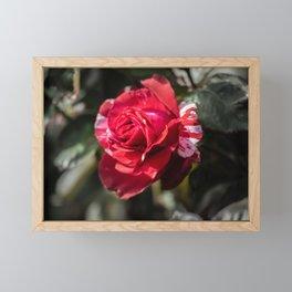 Rose8 Framed Mini Art Print