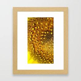 Sunflower Inner Circle Framed Art Print