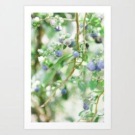Blueberry Days Art Print
