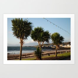 Millport Palms Art Print