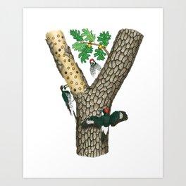 Acorn Woodpeckers Art Print