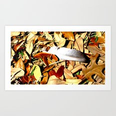 Feather and Leaves Art Print