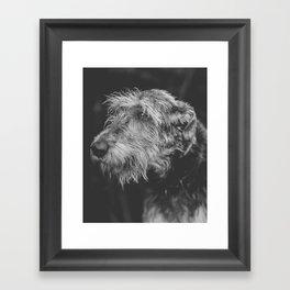 The Irish Wolfhound Framed Art Print