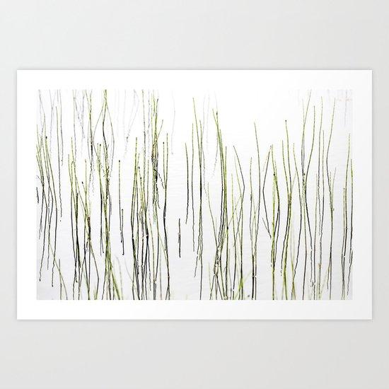 Cottongrass Art Print