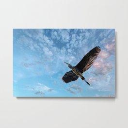Great Blue Heron Soaring Metal Print
