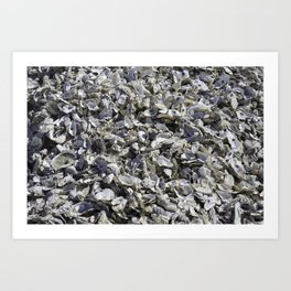 Shucked Oyster Shells Art Print