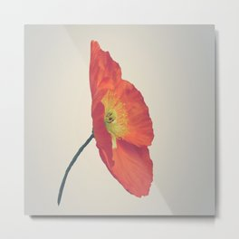 Poppy in Whole Metal Print