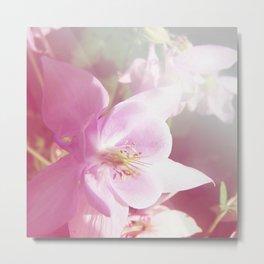 *Pinklight - Columbine Metal Print
