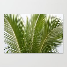 Palm Trees in Kauai Canvas Print