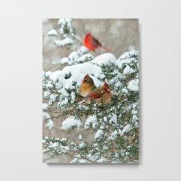 After the Snow Storm: Three Cardinals Metal Print