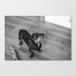 Weenie Dog Canvas Print