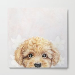 Toy poodle Dog illustration original painting print Metal Print