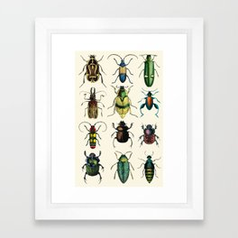 Jeweled Beetles  Framed Art Print