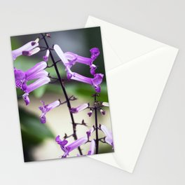 Longwood Gardens Autumn Series 315 Stationery Cards
