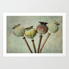 Poppy pods Art Print