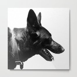 Z dog Metal Print