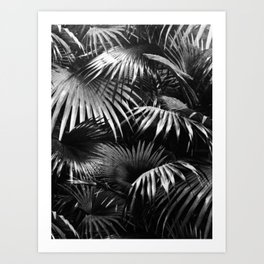 Tropical Botanic Jungle Garden Palm Leaf Black White Art Print