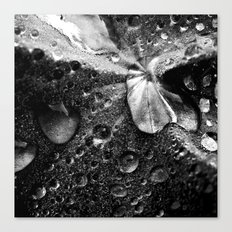 water drops XVII Canvas Print