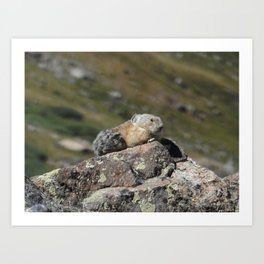 Summit Pika Art Print