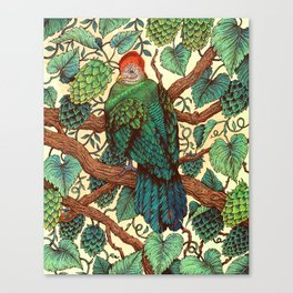 Tipsy Turaco Canvas Print