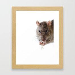 Rat! Framed Art Print
