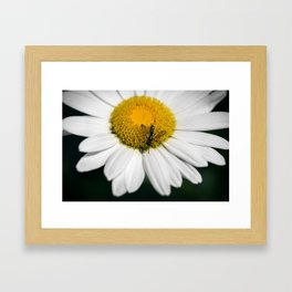 Hungry Bumble Bee Framed Art Print