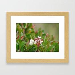 Butterfly Joy Framed Art Print