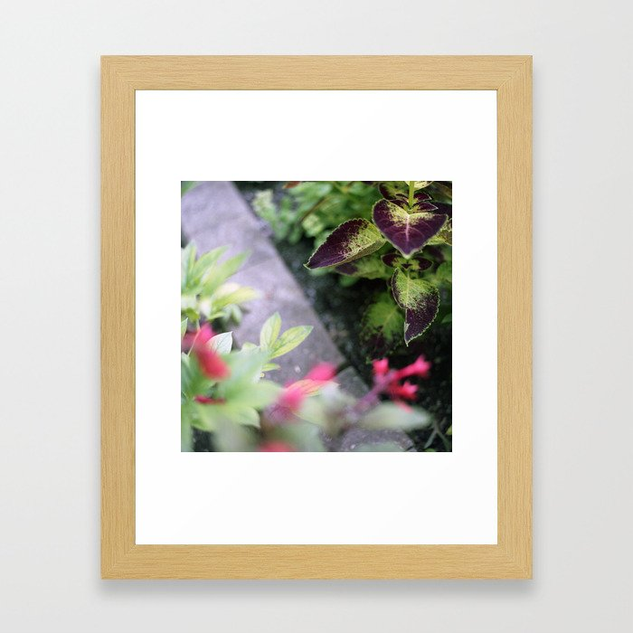 Coleus Framed Art Print