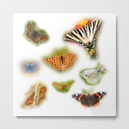 Colorful butterflies of europe Metal Print