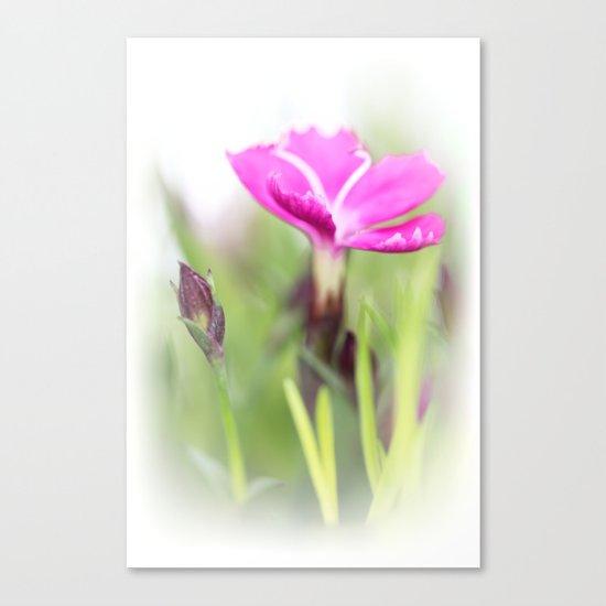 Lilac dream... so sweet... Canvas Print