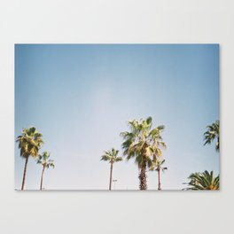 Palmtrees in Barcelona Europe   Blue Sky, Green Palm Trees Tropical vibe Canvas Print