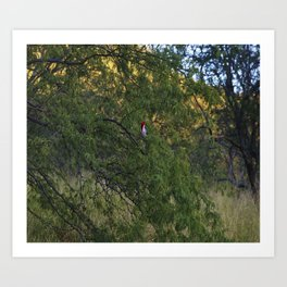 Cardenal in tree Art Print
