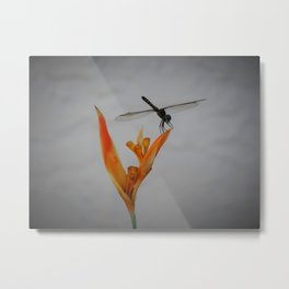 The dragonfly and the heliconia Metal Print