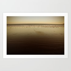 Seagulls on the Horizon Art Print