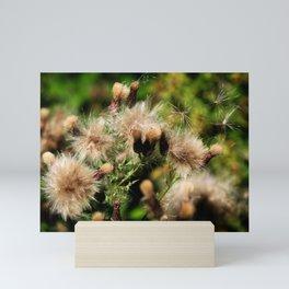Feather Grass - Study III Mini Art Print