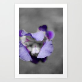 Purple and grey Art Print