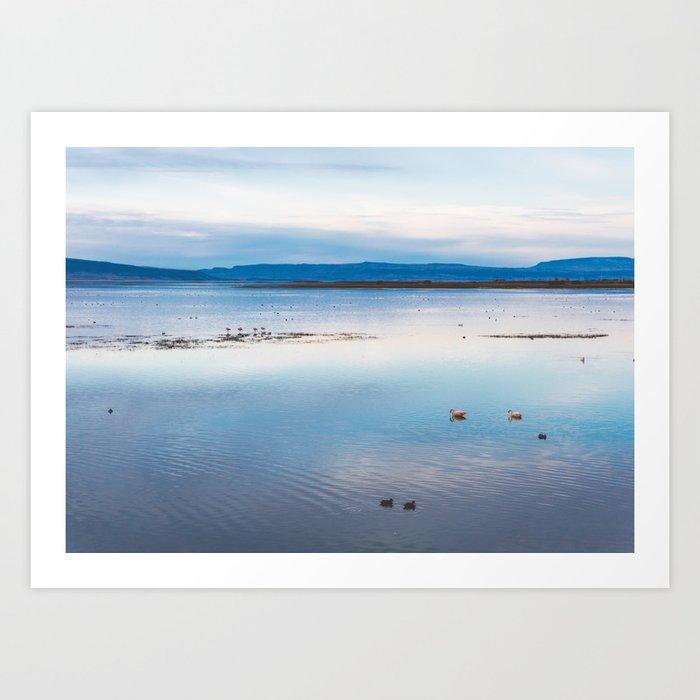 Flamingoes on El Calafate, Patagonia, Argentina Art Print