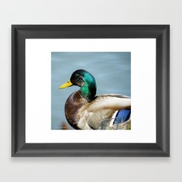 Duck in Pond Framed Art Print